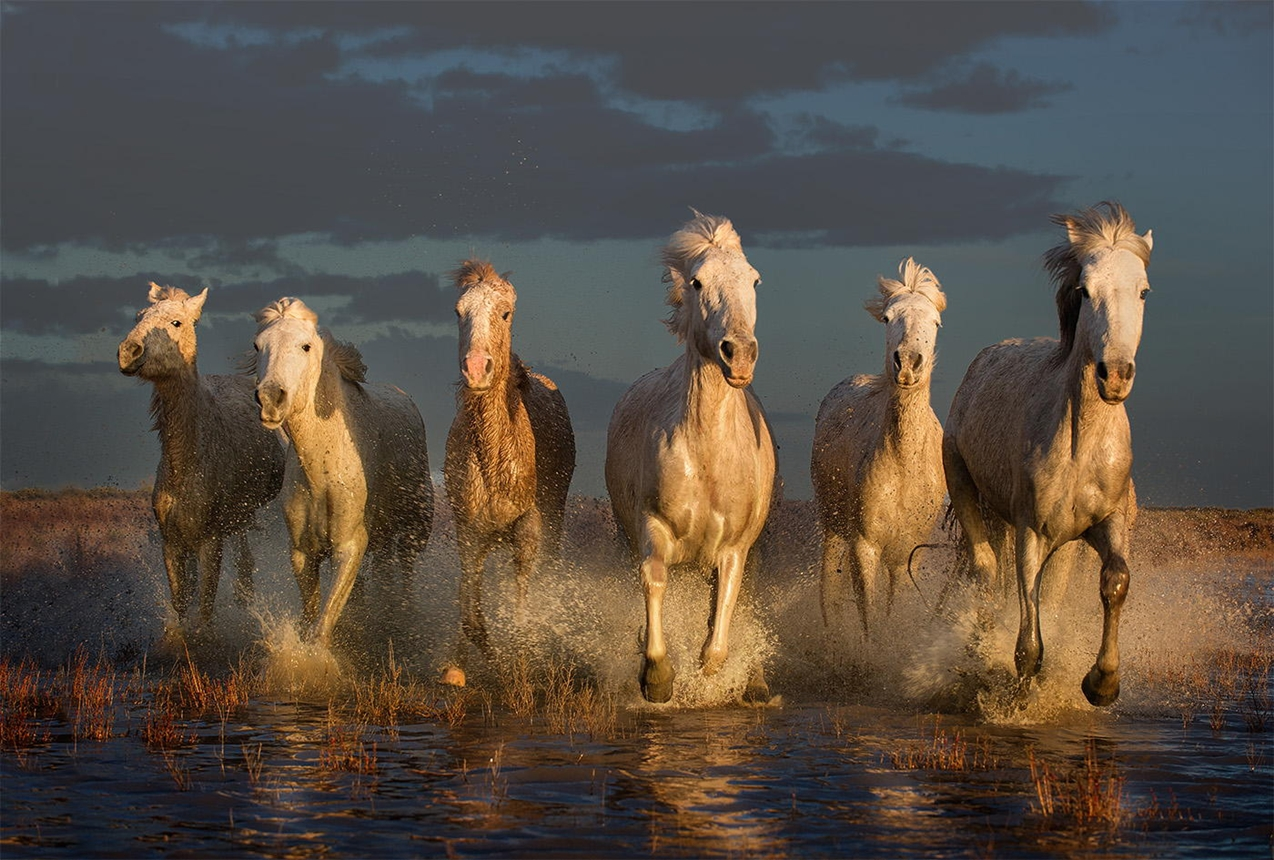 horse 07
