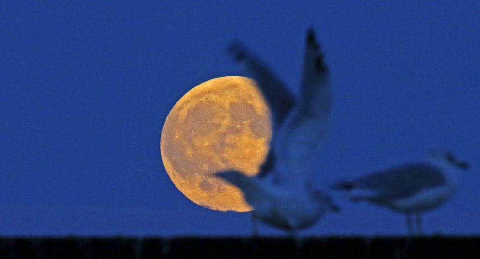 luna roja_12