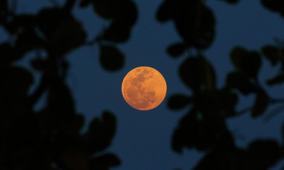 luna roja_24