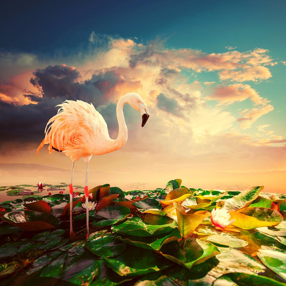 surreal-photo-manipulations-caras-ionut-11