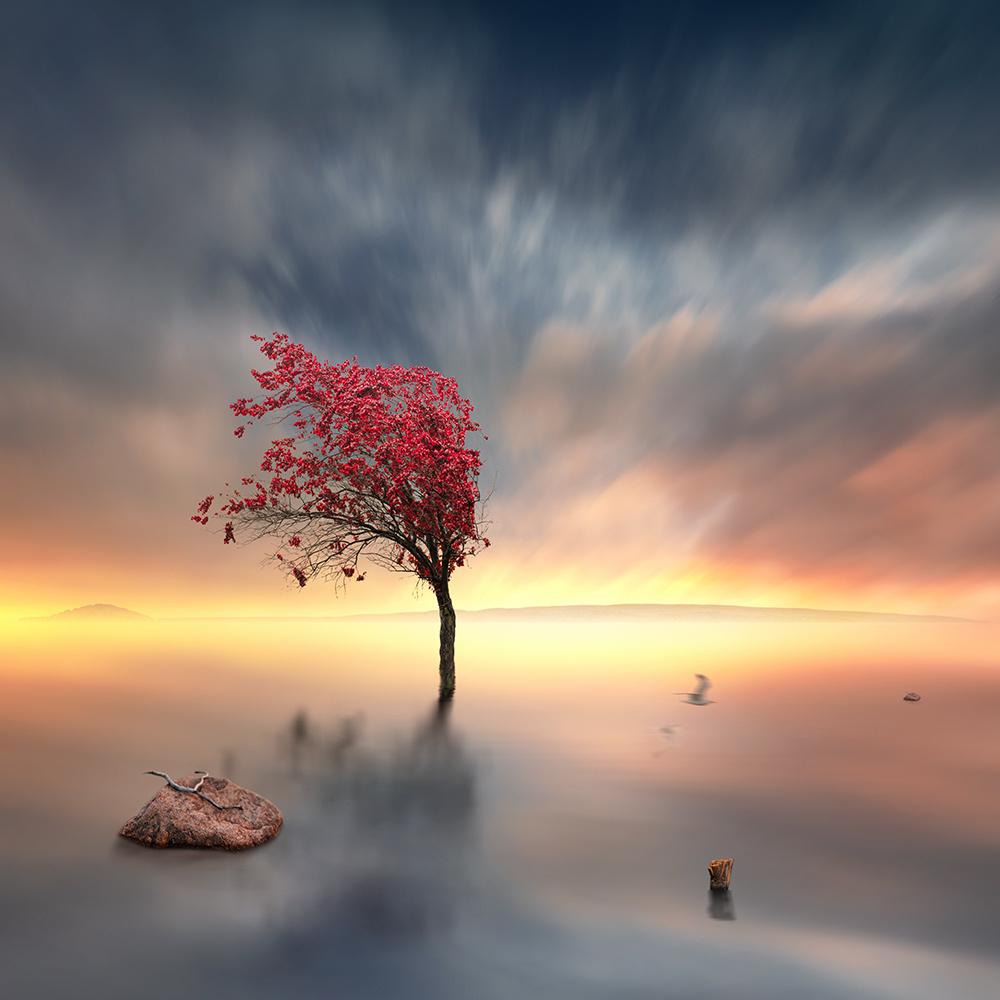 surreal-photo-manipulations-caras-ionut-12