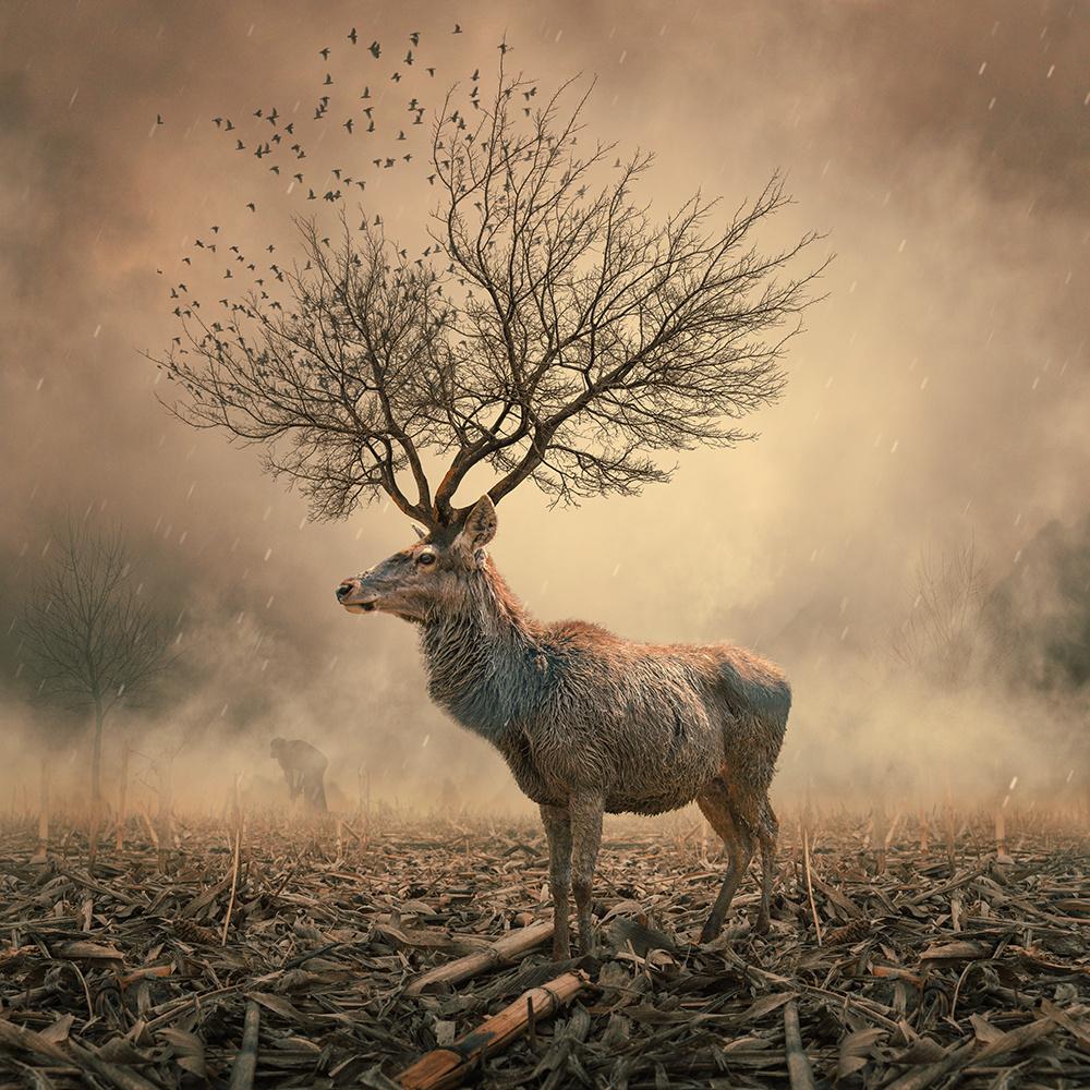surreal-photo-manipulations-caras-ionut-15
