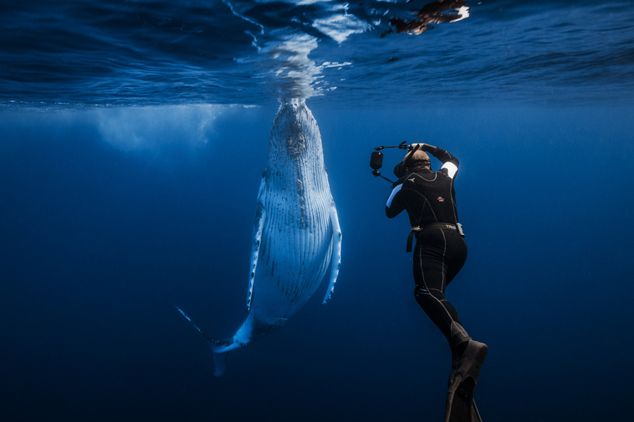 underwater photography of humpback whales 01