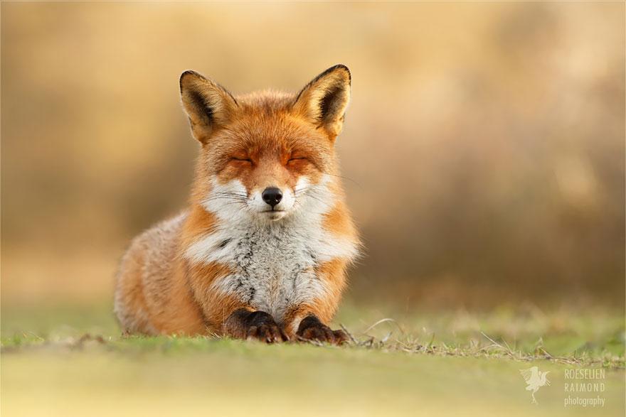 zen-foxes-roeselien-raimond-13__880