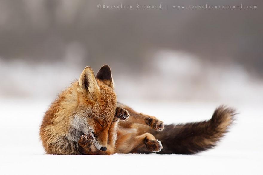 zen-foxes-roeselien-raimond-14__880