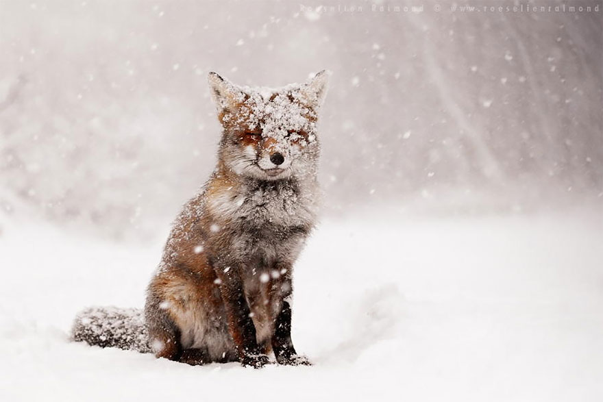 zen-foxes-roeselien-raimond-4__880