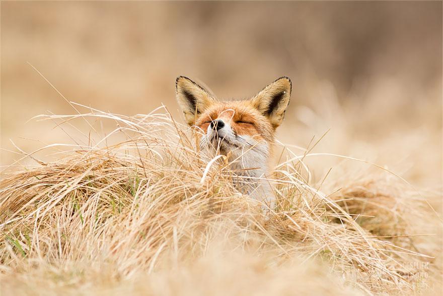 zen-foxes-roeselien-raimond-5__880