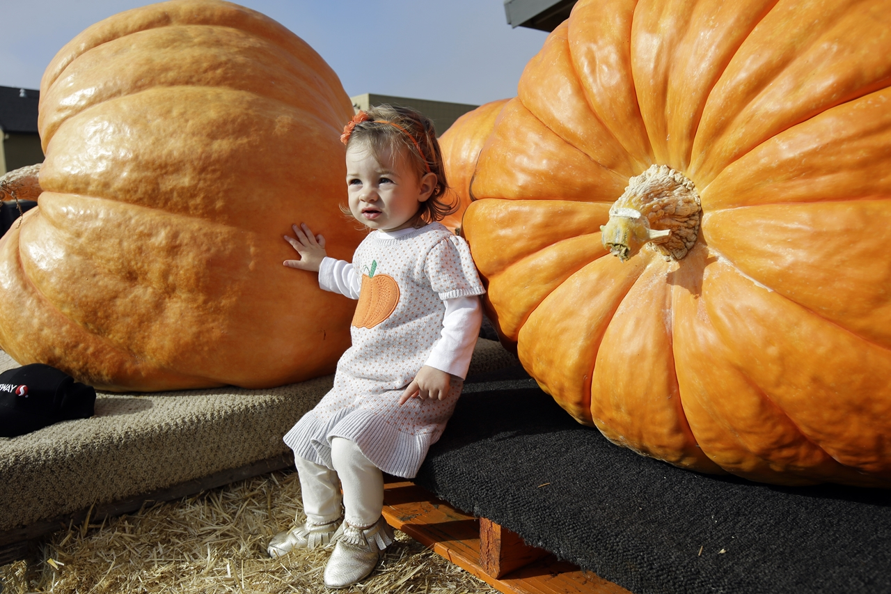 2015 Pumpkin World Championship 10