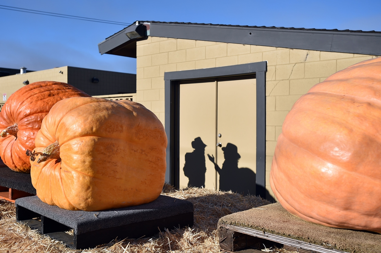 2015 Pumpkin World Championship 13