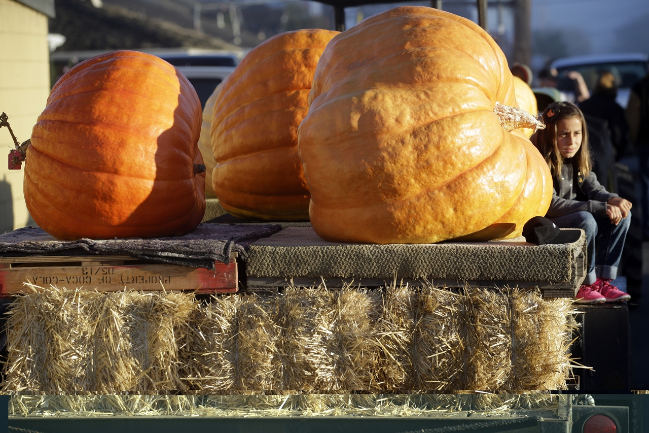 2015 Pumpkin World Championship 14