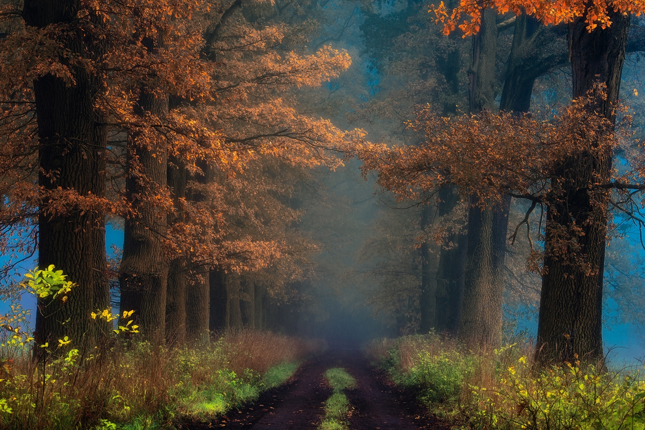 Autumn in pictures of Janek Sedlar 01