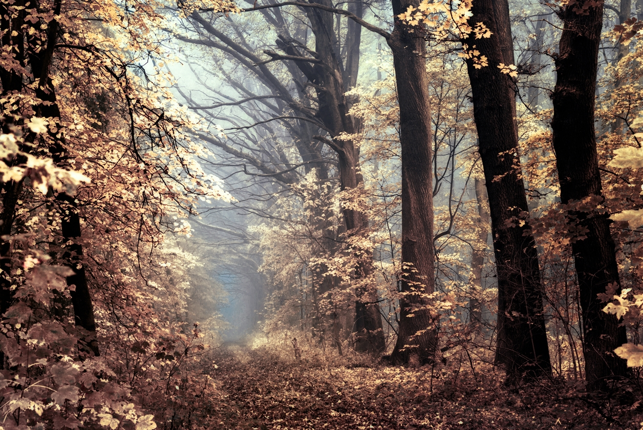Autumn in pictures of Janek Sedlar 02
