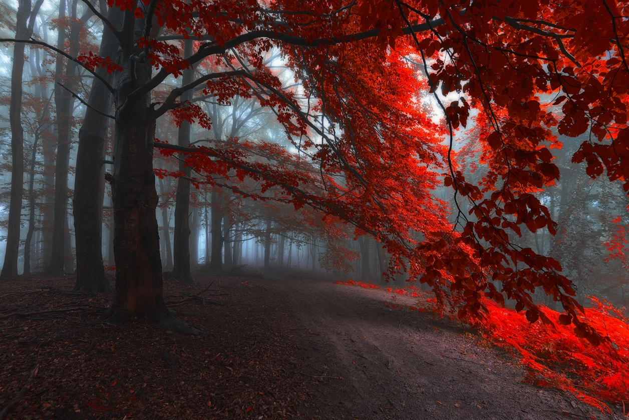 Autumn in pictures of Janek Sedlar 03