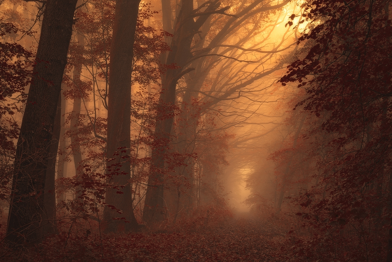 Autumn in pictures of Janek Sedlar 05