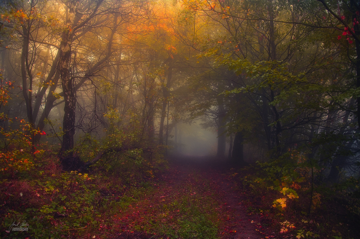 Autumn in pictures of Janek Sedlar 07