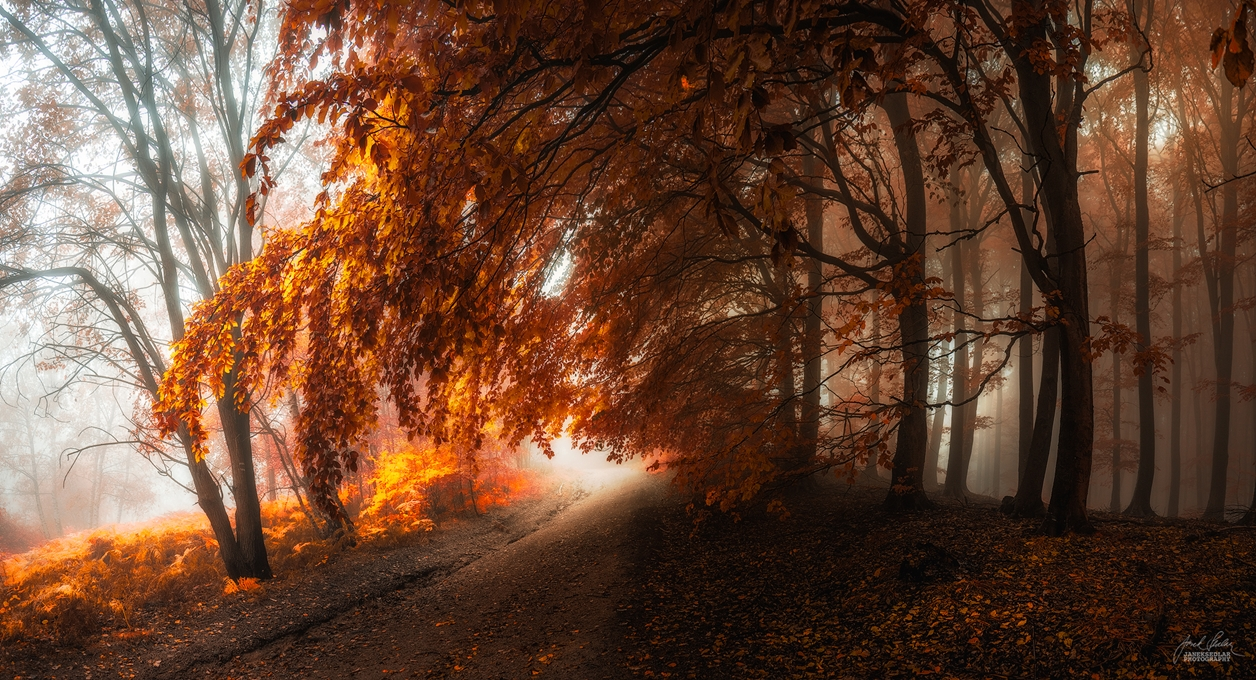 Autumn in pictures of Janek Sedlar 08