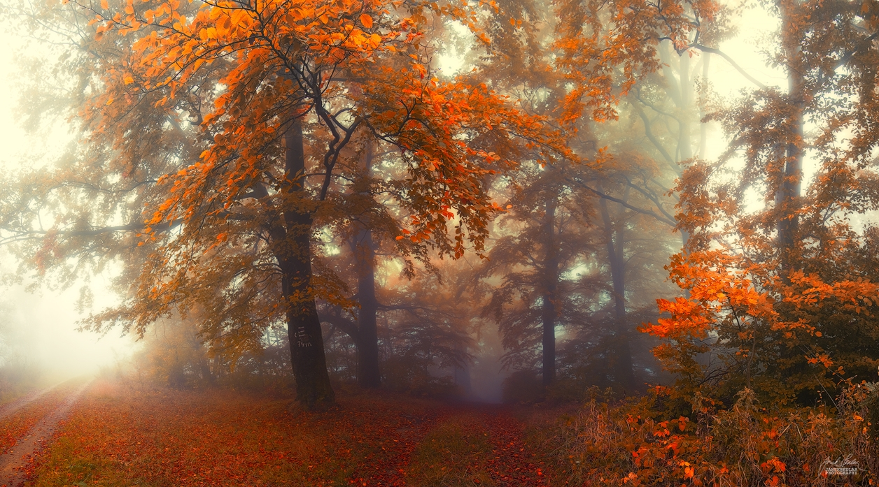 Autumn in pictures of Janek Sedlar 09
