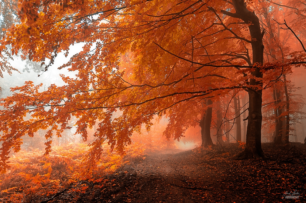 Autumn in pictures of Janek Sedlar 10