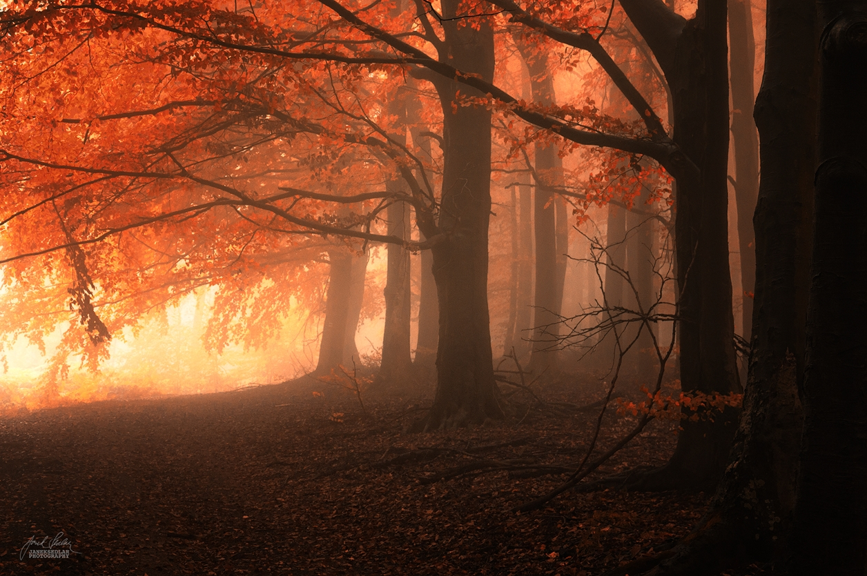 Autumn in pictures of Janek Sedlar 11