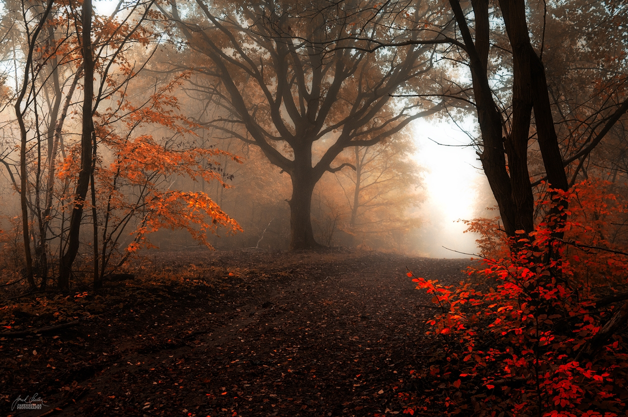 Autumn in pictures of Janek Sedlar 12