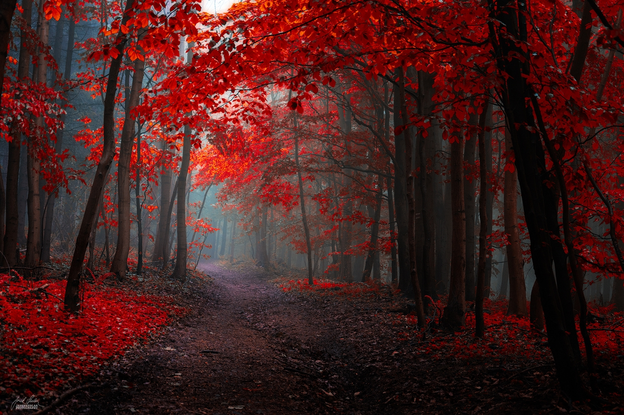 Autumn in pictures of Janek Sedlar 13