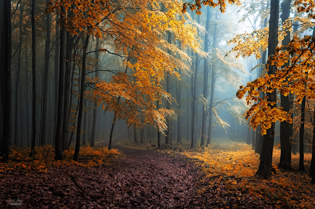 Autumn in pictures of Janek Sedlar 14