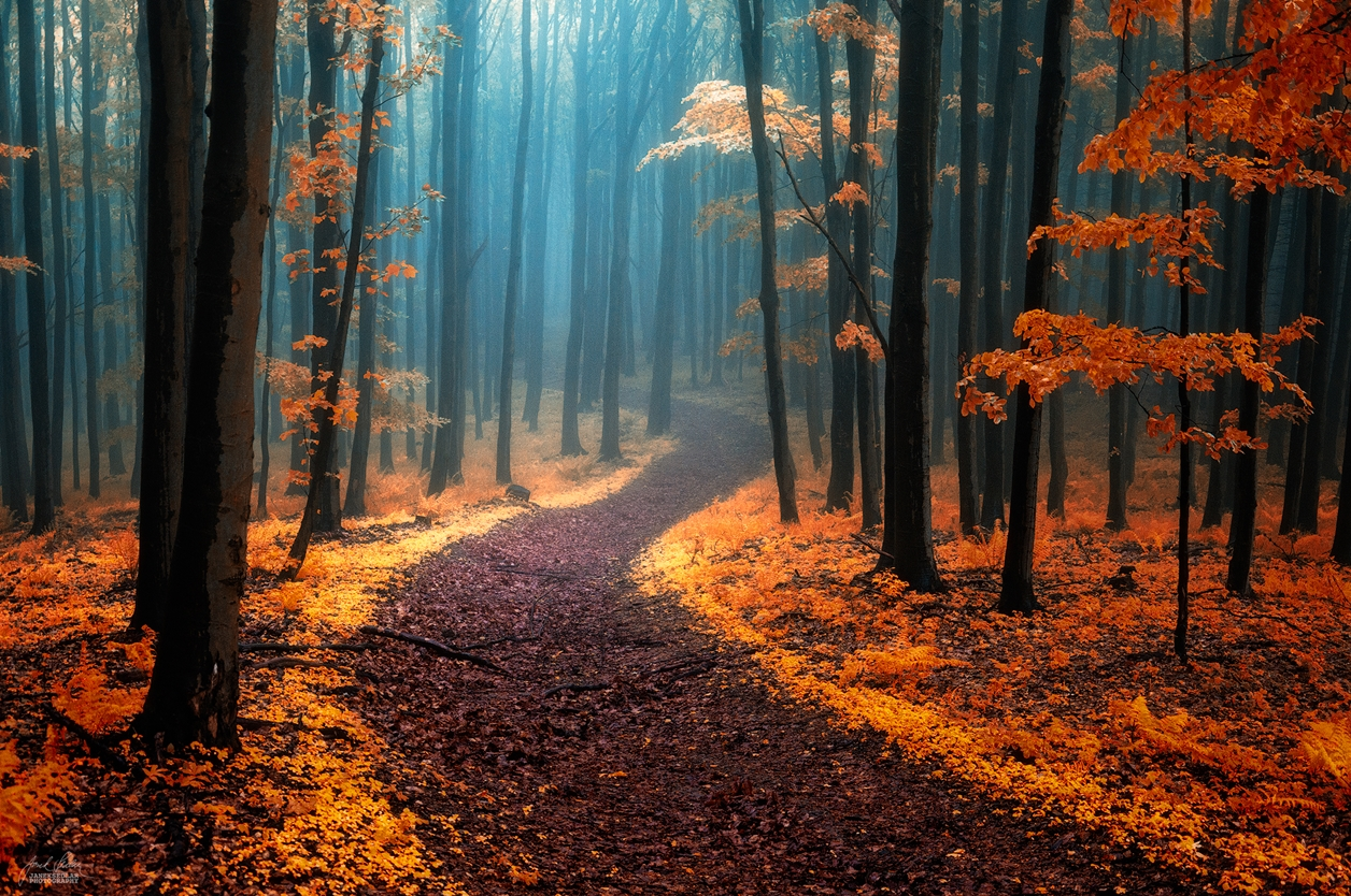 Autumn in pictures of Janek Sedlar 15