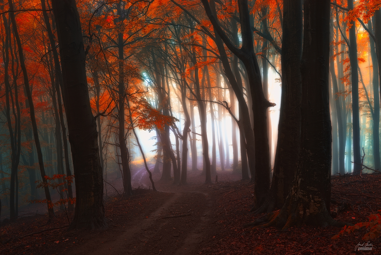 Autumn in pictures of Janek Sedlar 16