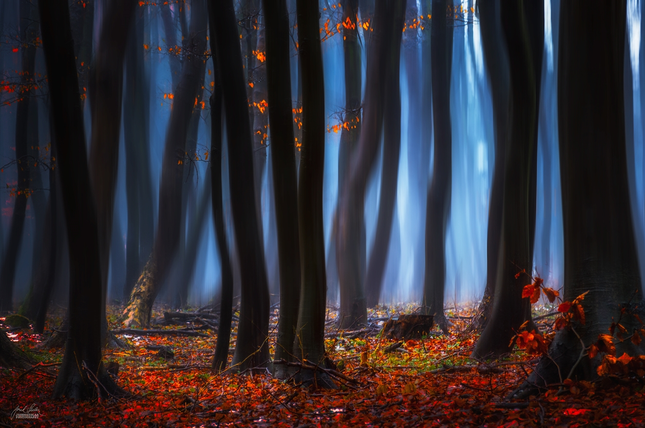 Autumn in pictures of Janek Sedlar 17