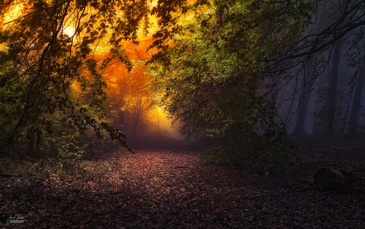 Autumn in pictures of Janek Sedlar 18