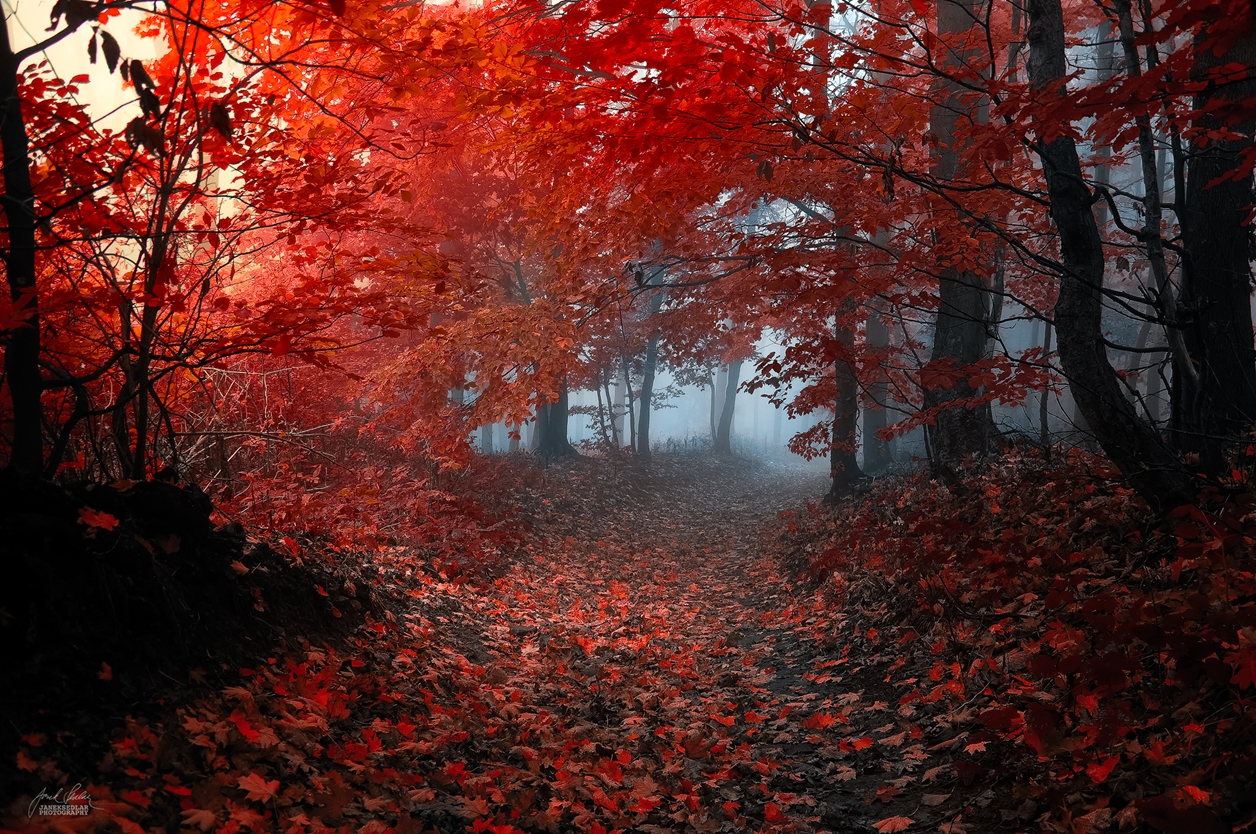 Autumn in pictures of Janek Sedlar 19
