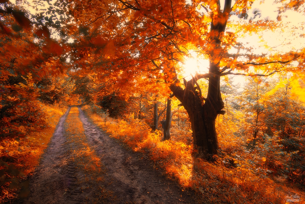 Autumn in pictures of Janek Sedlar 20