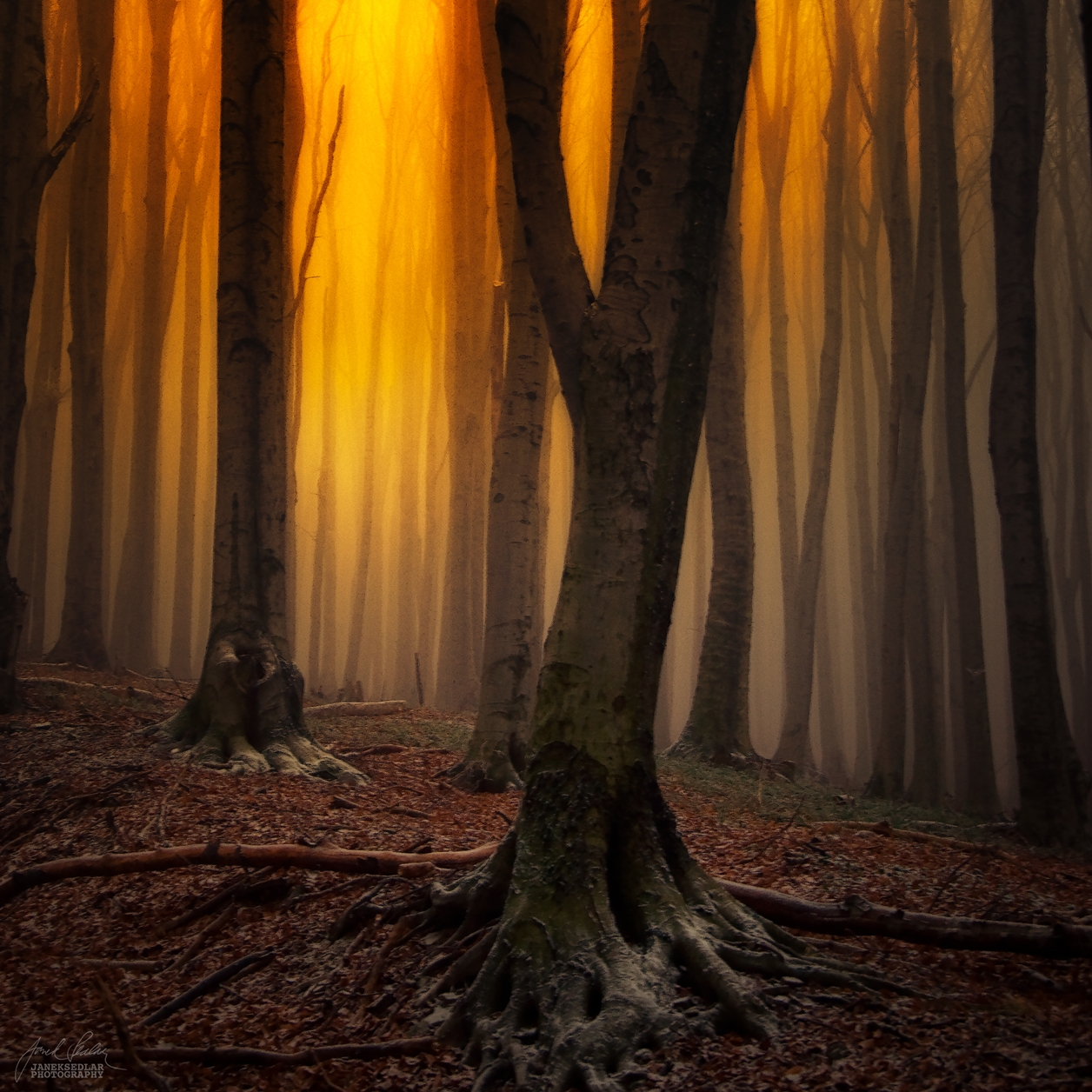 Autumn in pictures of Janek Sedlar 21