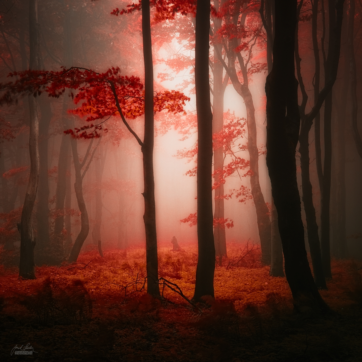 Autumn in pictures of Janek Sedlar 22