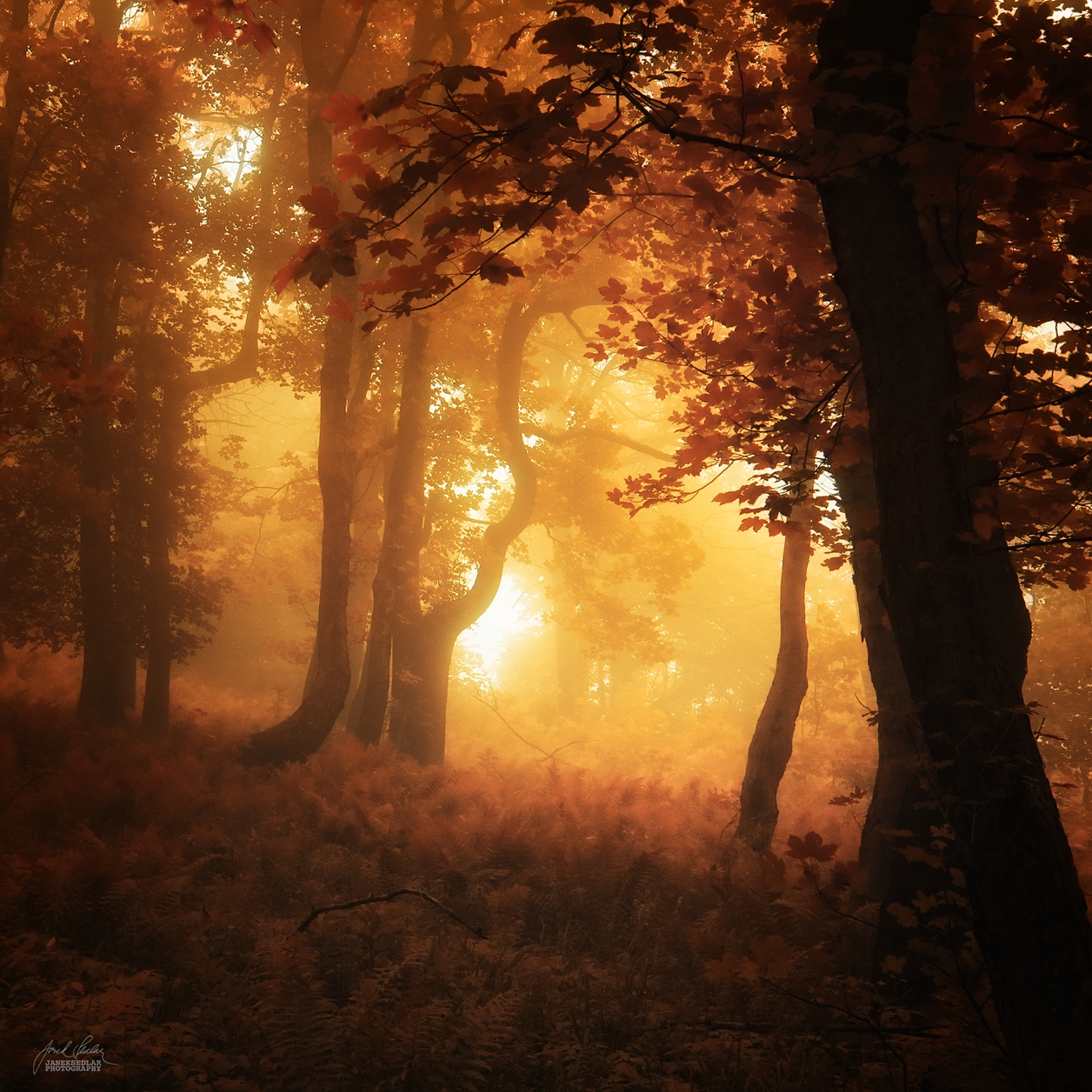Autumn in pictures of Janek Sedlar 23