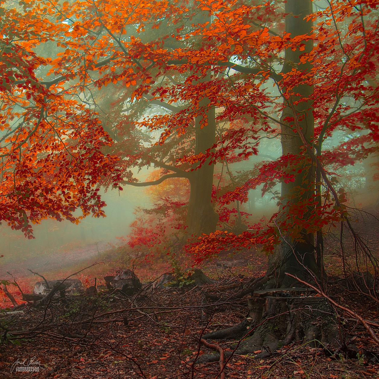 Autumn in pictures of Janek Sedlar 24