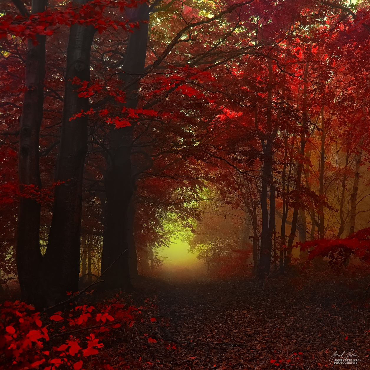 Autumn in pictures of Janek Sedlar 25