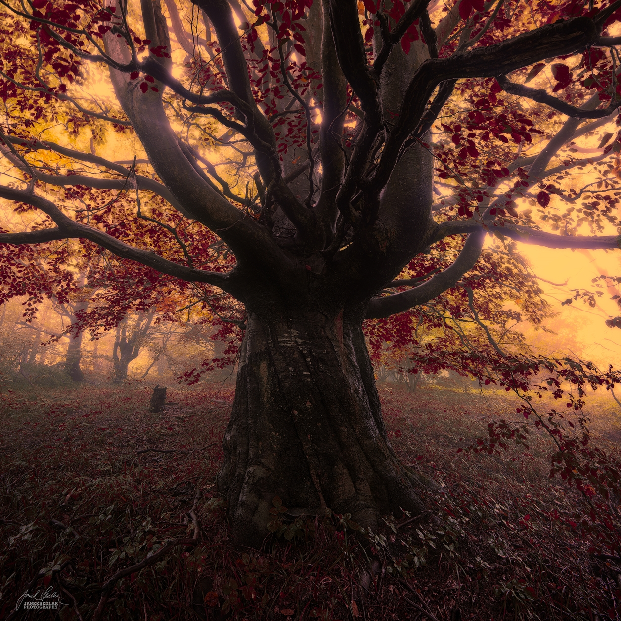 Autumn in pictures of Janek Sedlar 26