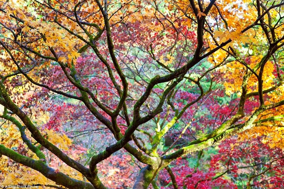 Autumn in the UK 05