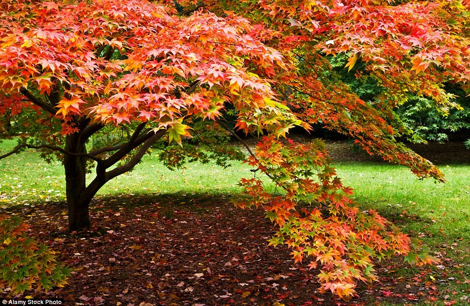 Autumn in the UK 06