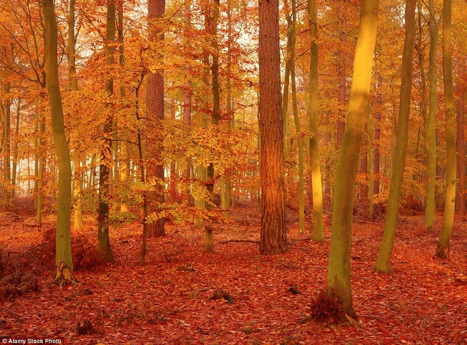 Autumn in the UK 07
