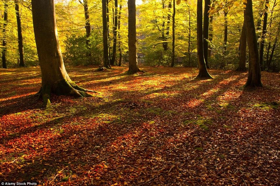 Autumn in the UK 13