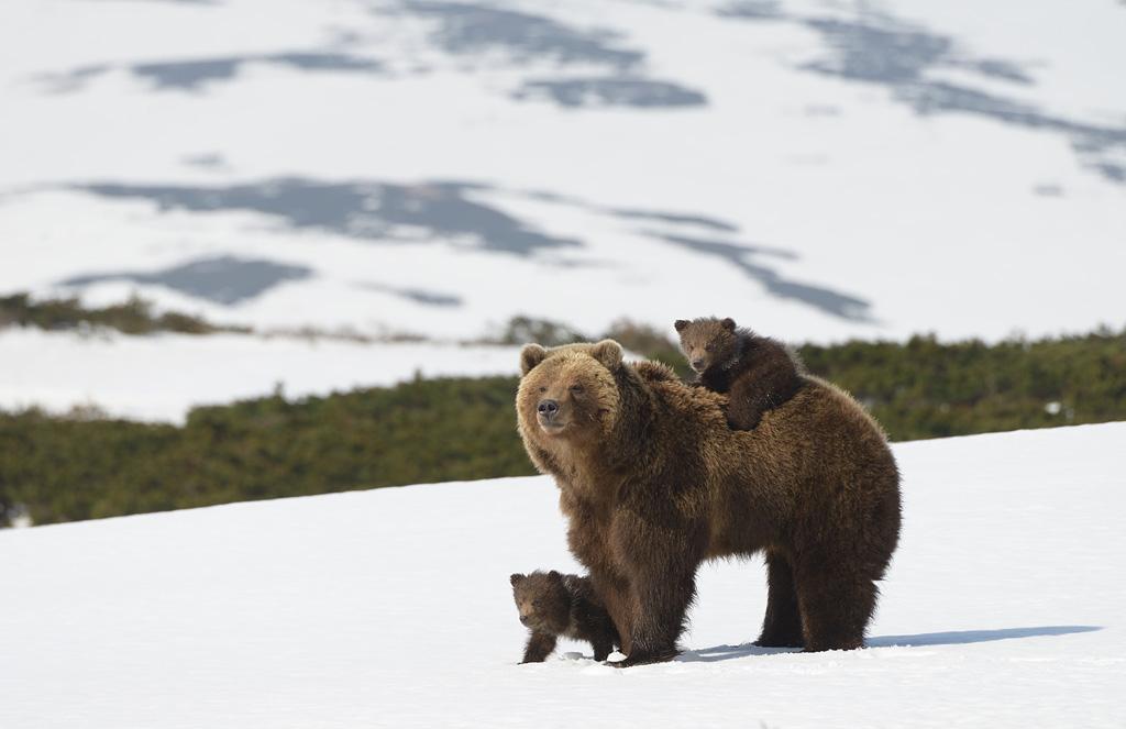 Bear family 02