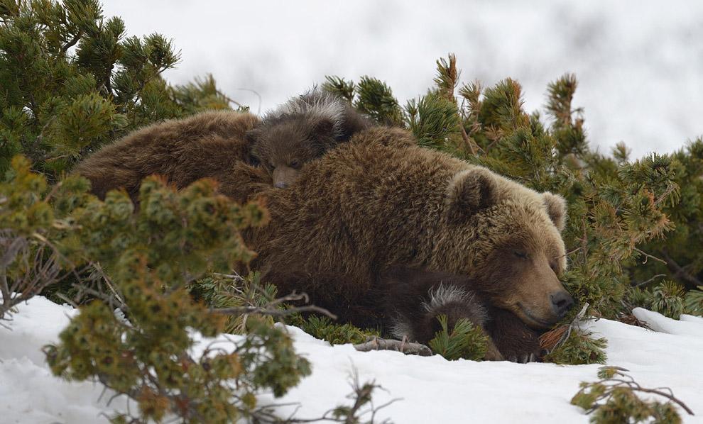 Bear family 05