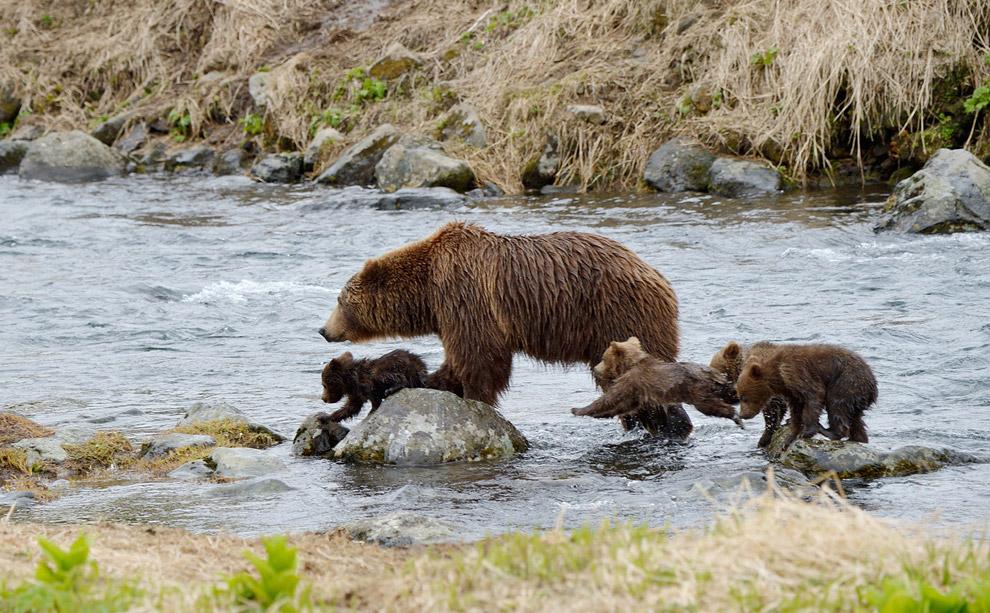 Bear family 06
