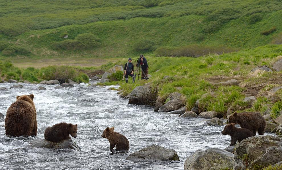 Bear family 08