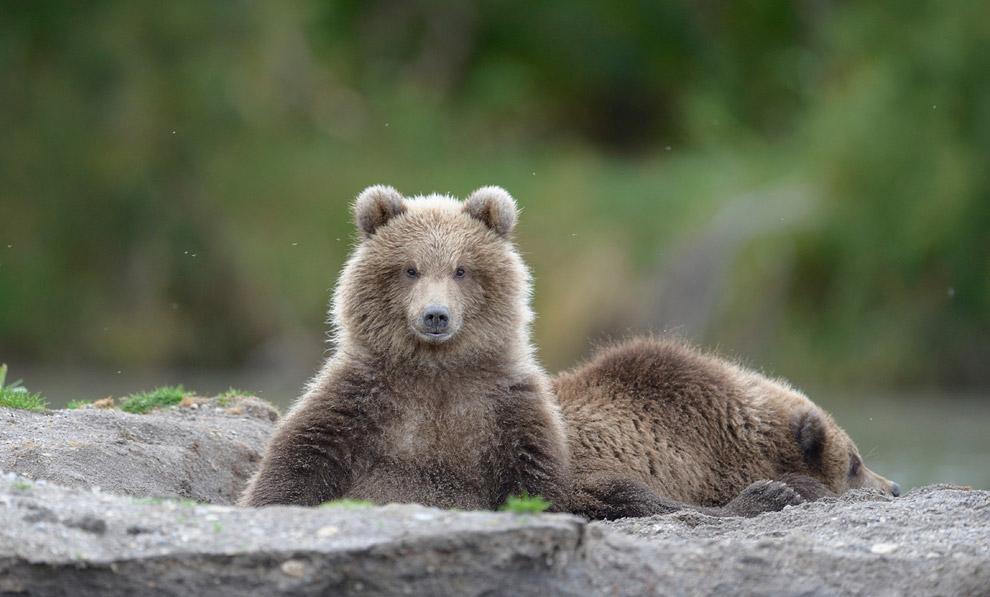 Bear family 09