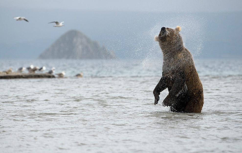 Bear family 10
