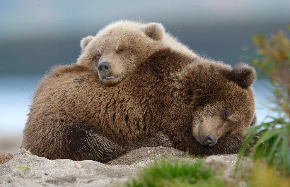 Bear family 11