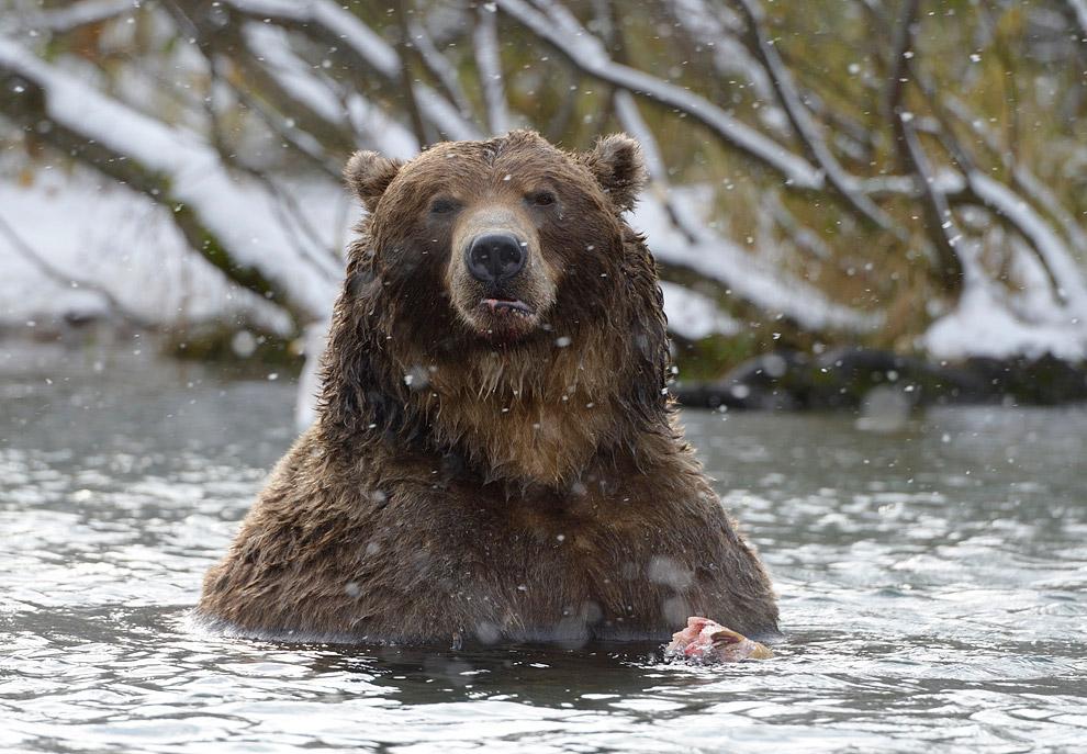 Bear family 13